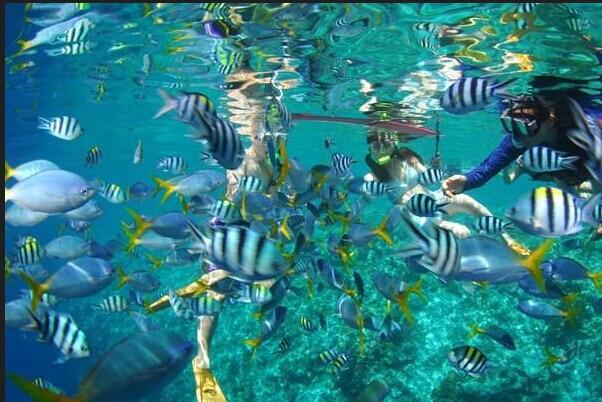 太空泥作品海洋生物步骤图片