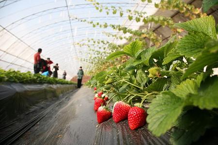 小珠山野生动物园,红石崖草莓采摘踏青一日游~