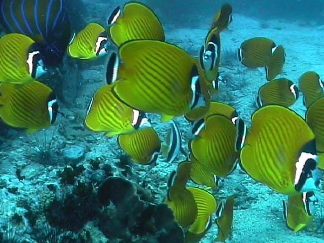 苏梅岛涛岛深潜海底世界里的鱼群
