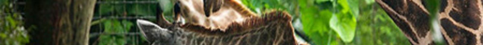 """动物以及飞禽,施展它们的天然才能""""保卫""""它们平静的热带雨林家园免遭"""