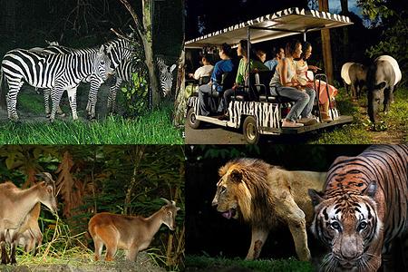 [成人价]新加坡市区 夜间动物园 含游览车 门票
