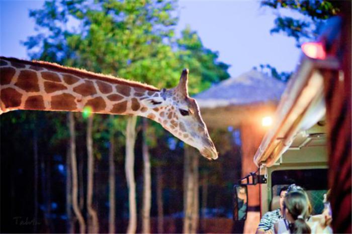 【易途8】清迈夜间动物园一日游(步行区 缆车 接送)