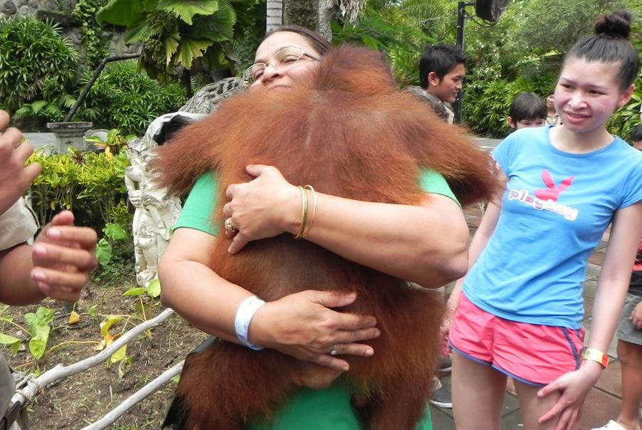 巴厘岛 主题游 产品详情  巴厘岛野生动物园——阿贡秀表演