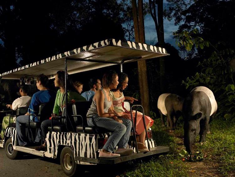 新加坡夜间动物园门票 儿童票 night safari