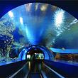 【11点发】北京海洋馆+北京动物园(含熊猫馆)一日游