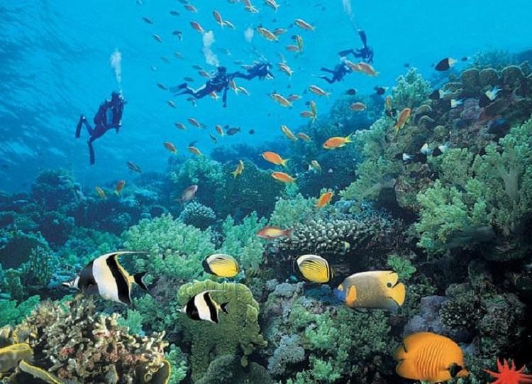 壁纸 海底 海底世界 海洋馆 水族馆 桌面 750_541