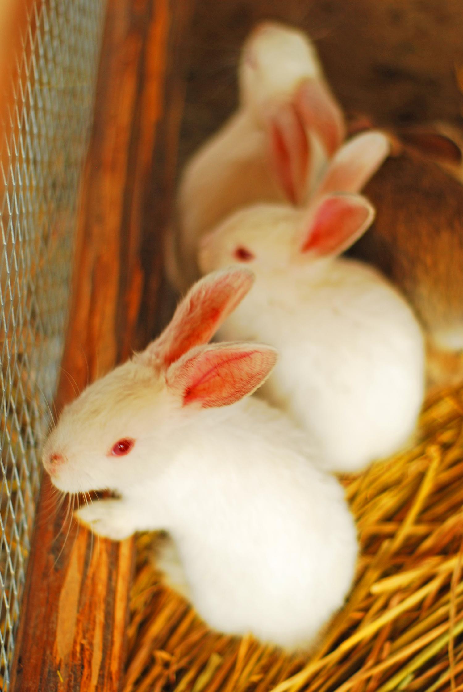 壁纸 动物 兔子 1500_2241 竖版 竖屏 手机