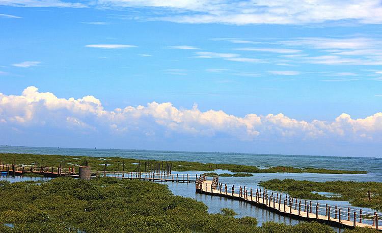 所属景区为金海湾红树林 所在景区 金海湾红树林 商家信息 此产品由