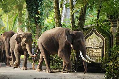 巴厘岛自由行 大象公园