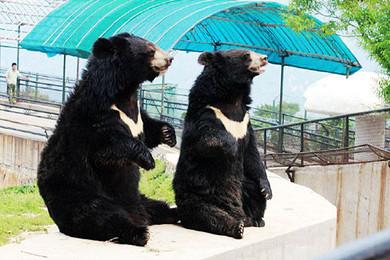 济南章丘野生动物园一日游 赠送大马戏表演 空气中的负氧离子高