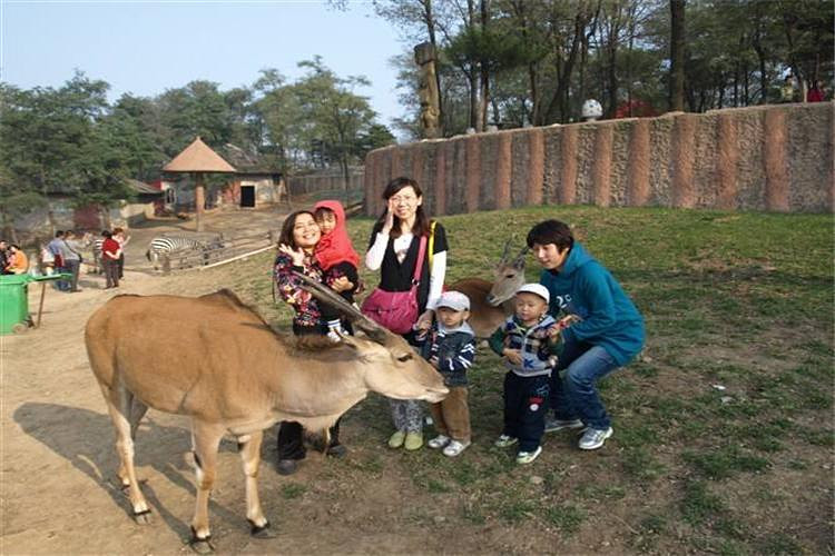 游览山东省最大的动物园【济南野生动物园】,景区共分为南北两大部分