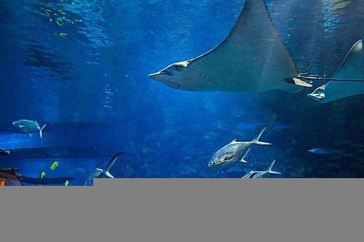 北京动物园,海洋馆一日lljq—b5