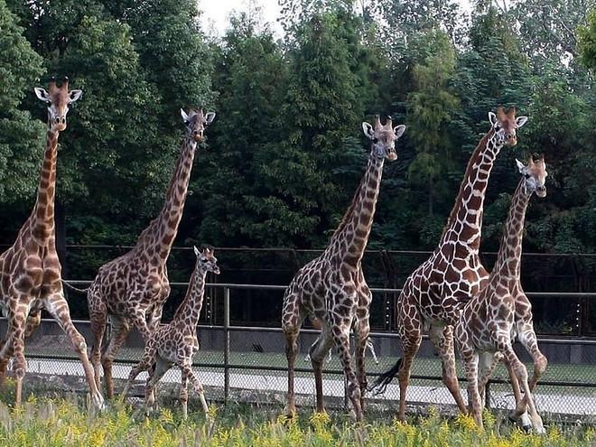 苏州野生动物园