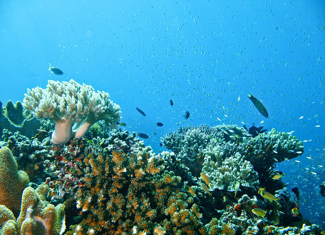 【华南】马来西亚热浪岛浪中岛跟团游 4晚5日梦幻海岛