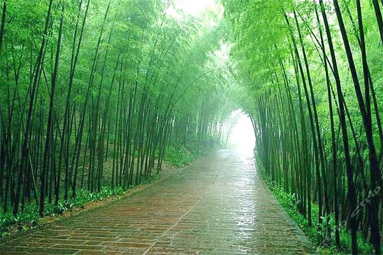 【开往春天的列车】——景德镇-婺源-黄山-千岛湖-西递-木坑竹海 专列