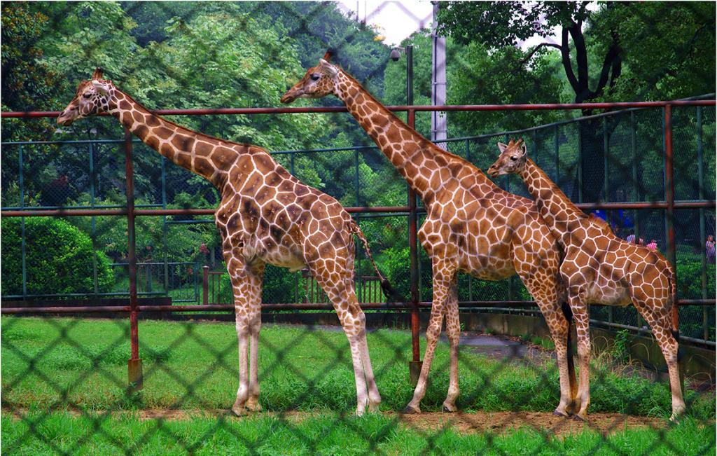 红山森林动物园(4月6日特惠票)2张+南京金陵晶元大
