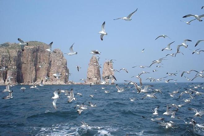 鸟岛由蛋岛和鸬鹚岛两个岛屿组成.岛上鸟类数量多,约有八,九万只之多.