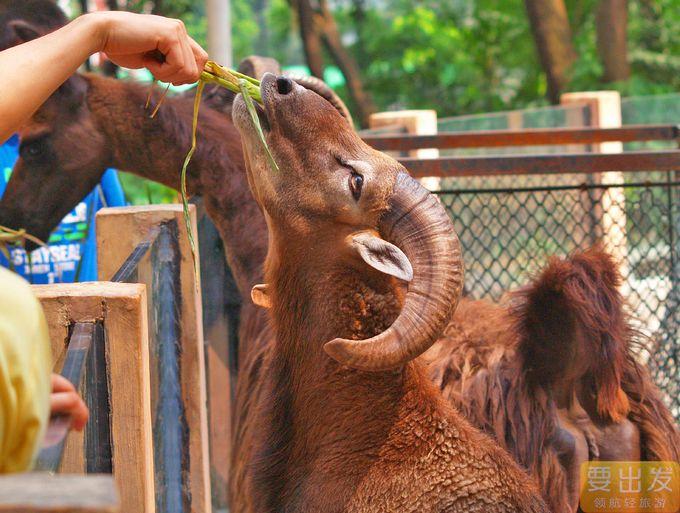 沙池乐园,开心农场,喂养小动物,体验快乐无限童年生活!