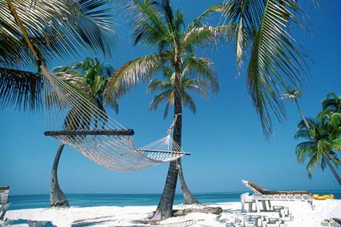 岛上椰子树,棕榈树等构成的热带丛林,像忠诚的卫士守护着漂亮的沙滩
