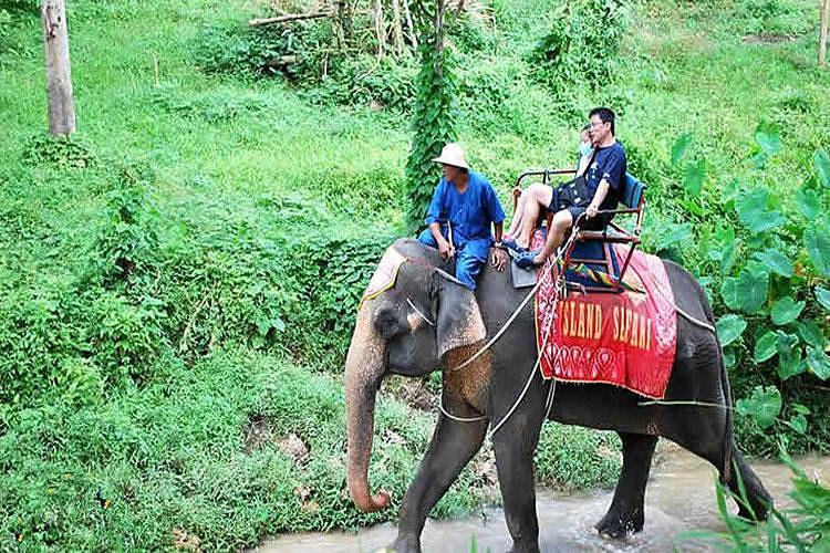 大象动物拖鞋英文翻译