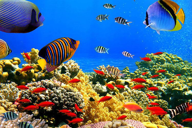 巴厘岛出海6天/7天+四晚海边国际四星+蓝梦岛+贝妮达