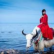 【海湖之恋 赠旅游三宝、KFC早餐】青海湖、茶卡盐湖一日游