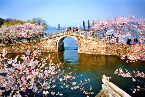 含鼋渚春涛,中国第一赏樱胜地——太湖樱花谷,三山仙岛,乘船畅游中国