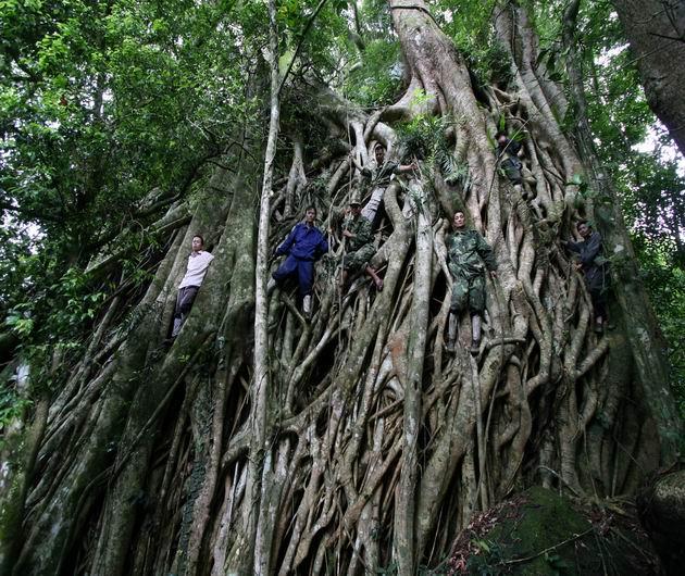 似同的阿凡达生命之树