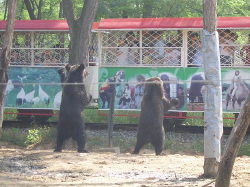 北戴河天津工人疗养院 秦皇岛野生动物园门票两张