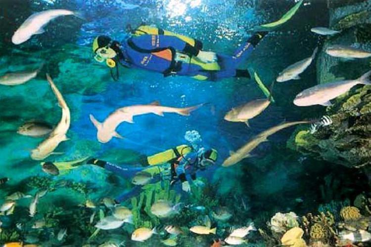 壁纸 海底 海底世界 海洋馆 水族馆 桌面 750_500