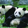 北京海洋馆+北京动物园(含熊猫馆)自助一日游