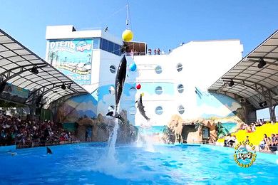 泰国 普吉岛 ne mo 尼莫海豚表演 dolphins bay show