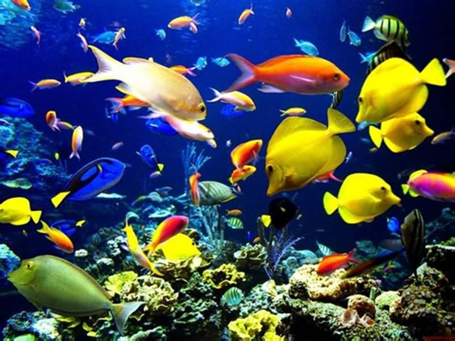 青岛海底世界(成人票)2张+青岛china公社文化艺术酒店