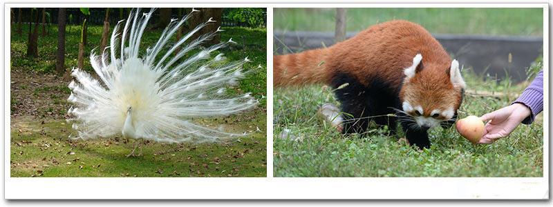 【武汉九峰森林动物园】九峰森林动物园成人票