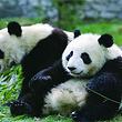 【9点发】北京海洋馆+北京动物园(含熊猫馆)一日游