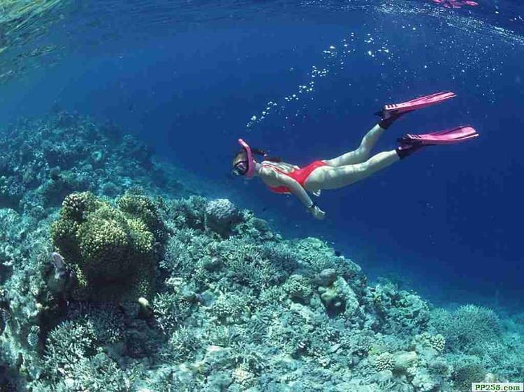 五星神仙珊瑚岛