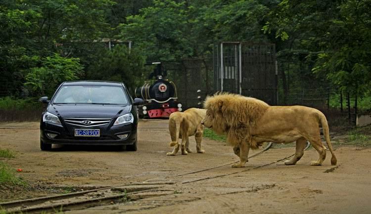 秦皇岛野生动物园利用森林公园得天独厚的森林资源和优美的自然环