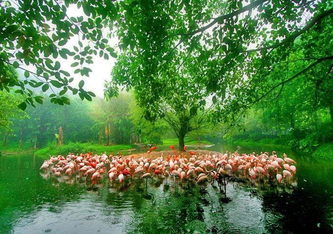 广州香江野生动物园自驾游套票:360度全方位,以最自由的方式感受最