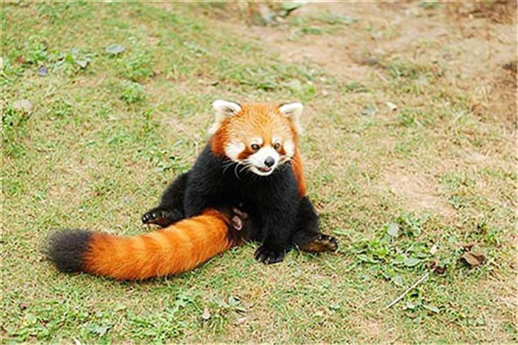 大连森林动物园一日游_大连森林动物园_大连动物园在哪