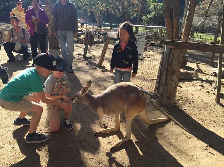可伦宾野生动物园——该动物园由自然资源保护工作