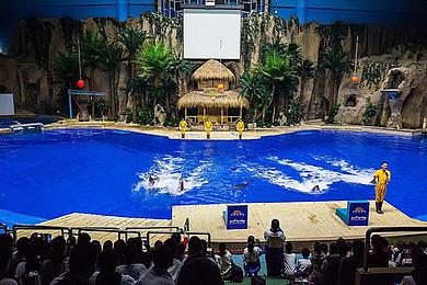 北京动物园+海洋馆+梦东方未来世界二日游