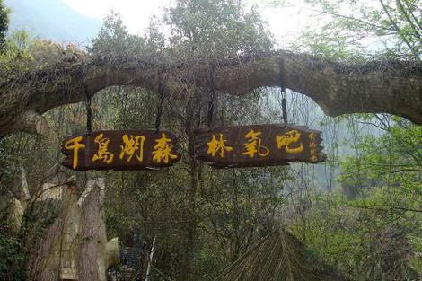 【千岛湖龙川湾知青旅舍1晚住宿团购 千岛湖森林氧吧