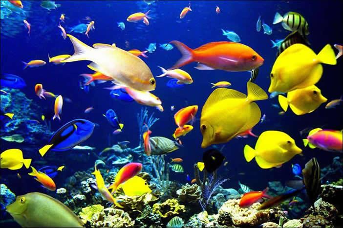 海洋电影图片素材