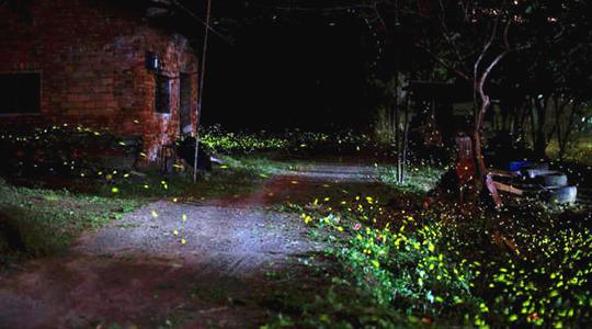 邛崃 天台山 天台山为亚洲最大的萤火虫观赏基地.