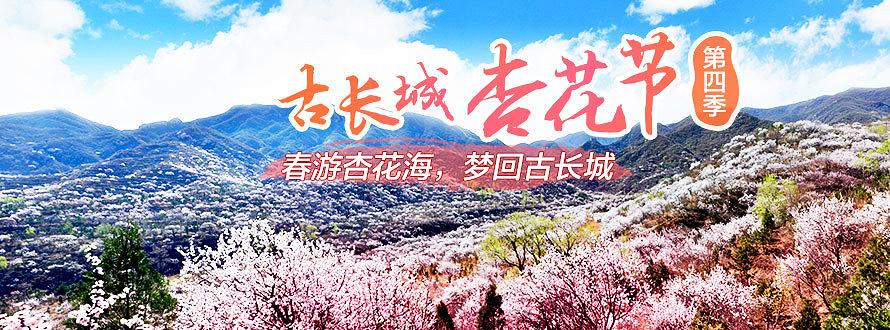 八达岭古长城杏花节