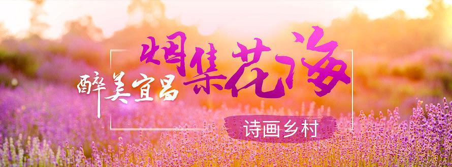 湖北宜昌烟集花海