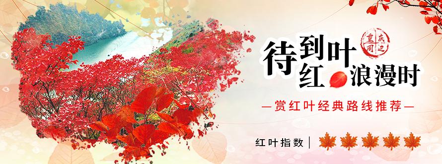 2017重庆秋季红叶