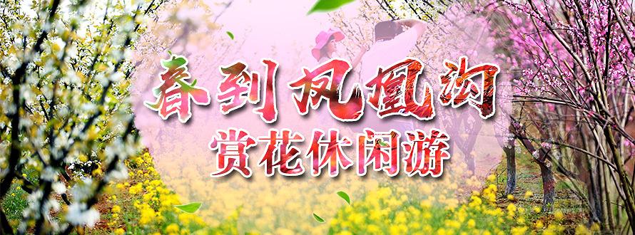 凤凰沟(梅花节)