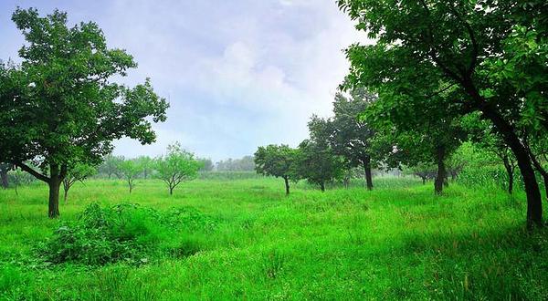 绿野仙踪生态庄园