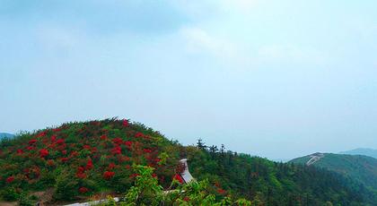 """杜鹃,枫树,因此,秋天满目红枫,寄托着远古先人""""雪里梅花开,迎来万山红图片"""